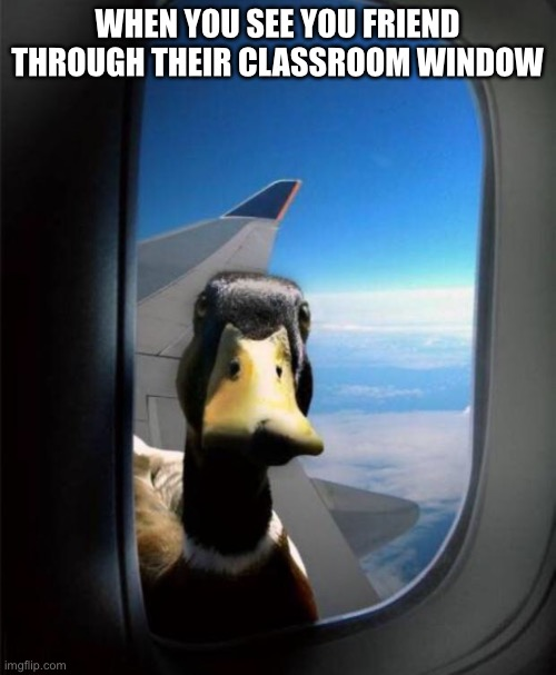 Duck on plane wing |  WHEN YOU SEE YOU FRIEND THROUGH THEIR CLASSROOM WINDOW | image tagged in duck on plane wing | made w/ Imgflip meme maker