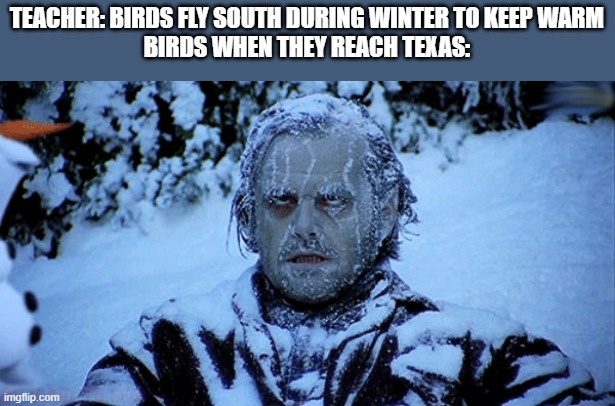 0w0 |  TEACHER: BIRDS FLY SOUTH DURING WINTER TO KEEP WARM BIRDS WHEN THEY REACH TEXAS: | image tagged in freezing cold | made w/ Imgflip meme maker