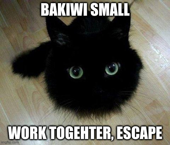 BAKIWI SMALL; WORK TOGEHTER, ESCAPE | image tagged in soot cat | made w/ Imgflip meme maker