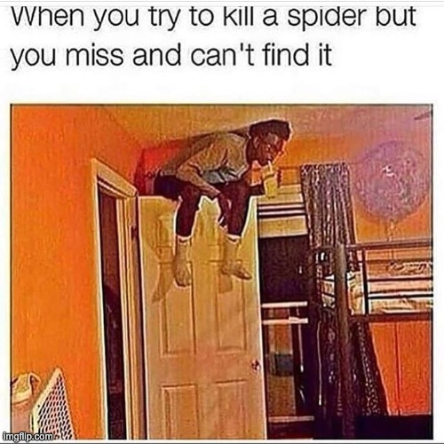 SPOODER | image tagged in spiders,spider,squashing spider,spooder,squash,squish | made w/ Imgflip meme maker