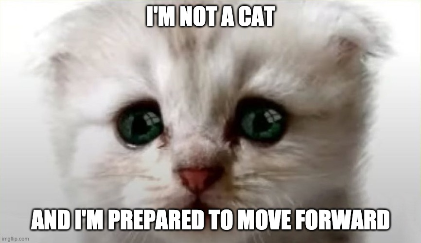 Real Cat Lawyer |  I'M NOT A CAT; AND I'M PREPARED TO MOVE FORWARD | image tagged in realcatlawyer,real cat lawyer,zoomcatlawyer,zoomlawyer | made w/ Imgflip meme maker