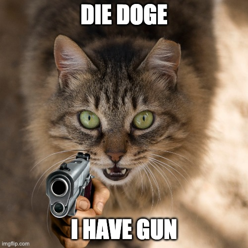 Cat decides he's had enough |  DIE DOGE; I HAVE GUN | image tagged in but that's none of my business | made w/ Imgflip meme maker