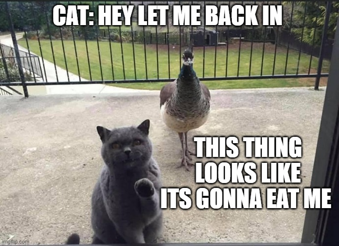 CAT: HEY LET ME BACK IN; THIS THING LOOKS LIKE ITS GONNA EAT ME | image tagged in cat,humor | made w/ Imgflip meme maker