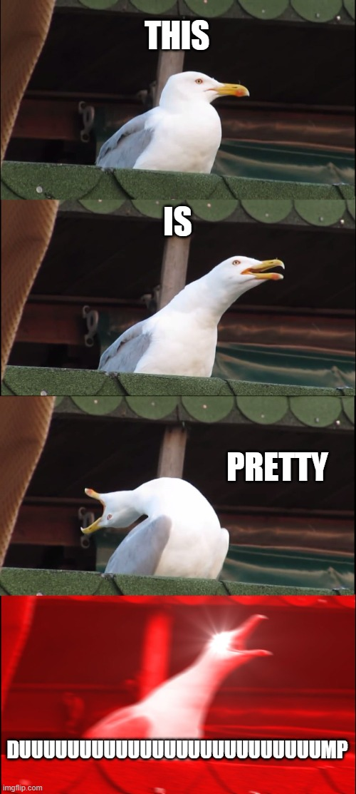 Inhaling Seagull Meme | THIS IS PRETTY DUUUUUUUUUUUUUUUUUUUUUUUUUMP | image tagged in memes,inhaling seagull | made w/ Imgflip meme maker