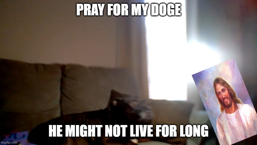 pray for doge |  PRAY FOR MY DOGE; HE MIGHT NOT LIVE FOR LONG | image tagged in dog,cute dog,famous | made w/ Imgflip meme maker