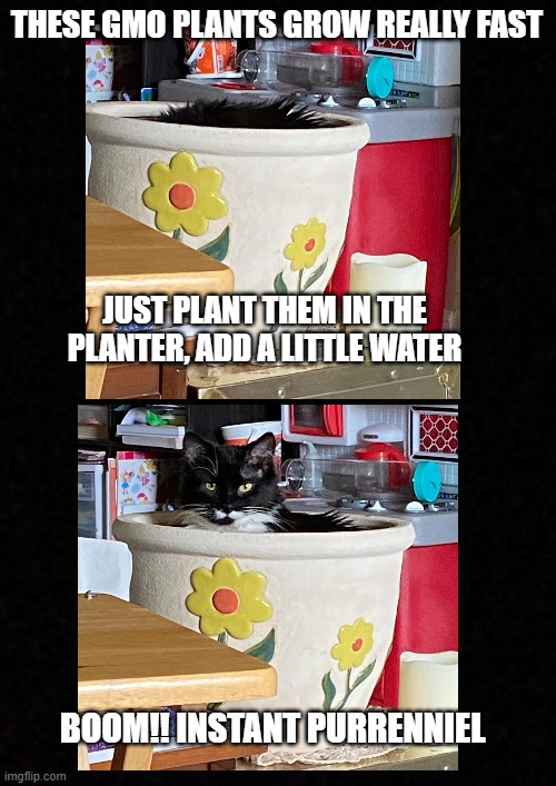 Blank  |  THESE GMO PLANTS GROW REALLY FAST; JUST PLANT THEM IN THE PLANTER, ADD A LITTLE WATER; BOOM!! INSTANT PURRENNIEL | image tagged in blank | made w/ Imgflip meme maker