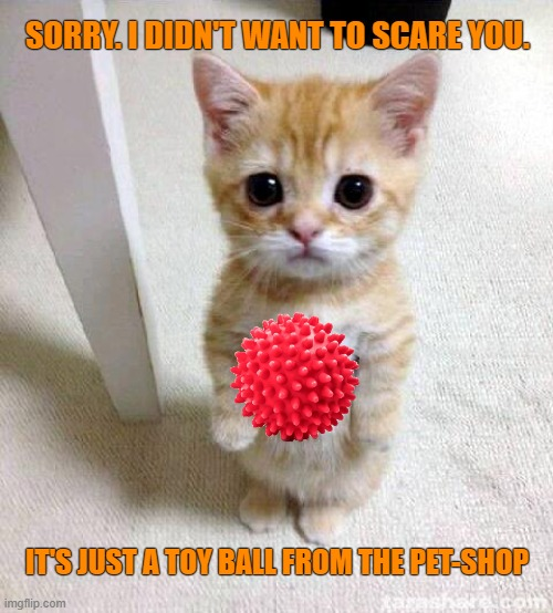 They look sooooo alike |  SORRY. I DIDN'T WANT TO SCARE YOU. IT'S JUST A TOY BALL FROM THE PET-SHOP | image tagged in memes,cute cat,funny,coronavirus,pets,toys | made w/ Imgflip meme maker