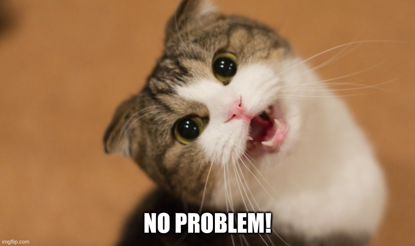 no problem cat | NO PROBLEM! | image tagged in no problem cat | made w/ Imgflip meme maker