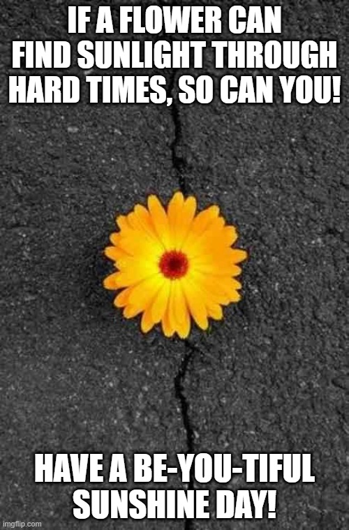 Be-you-tiful sunshine day |  IF A FLOWER CAN FIND SUNLIGHT THROUGH HARD TIMES, SO CAN YOU! HAVE A BE-YOU-TIFUL SUNSHINE DAY! | image tagged in flower in concrete | made w/ Imgflip meme maker