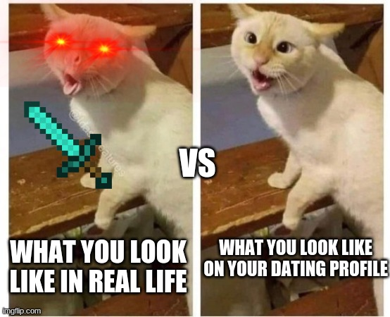 cat |  VS; WHAT YOU LOOK LIKE IN REAL LIFE; WHAT YOU LOOK LIKE ON YOUR DATING PROFILE | image tagged in cats,funny meme | made w/ Imgflip meme maker