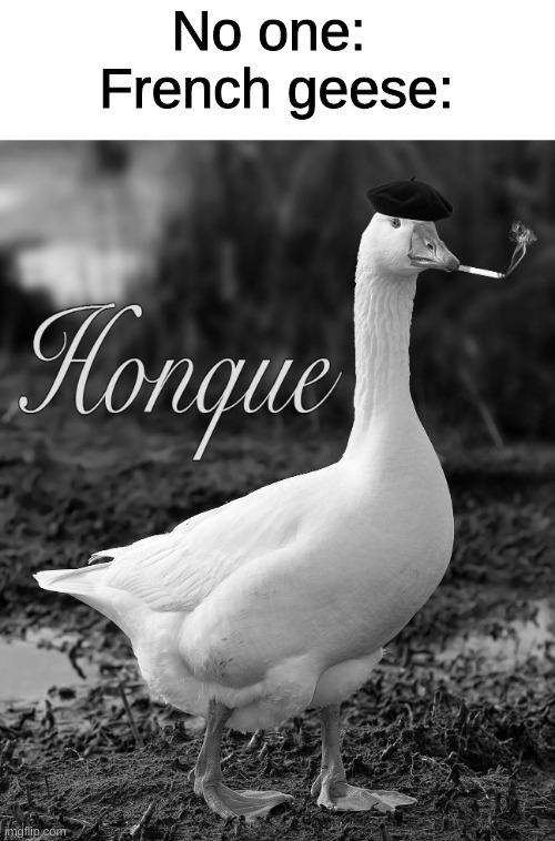 No one:  French geese: | image tagged in memes,funny,goose | made w/ Imgflip meme maker