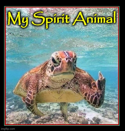 A Turtle who tells it like it is |  My Spirit Animal | image tagged in vince vance,turtles,funny animal meme,indians,spirit animal,grouchy | made w/ Imgflip meme maker