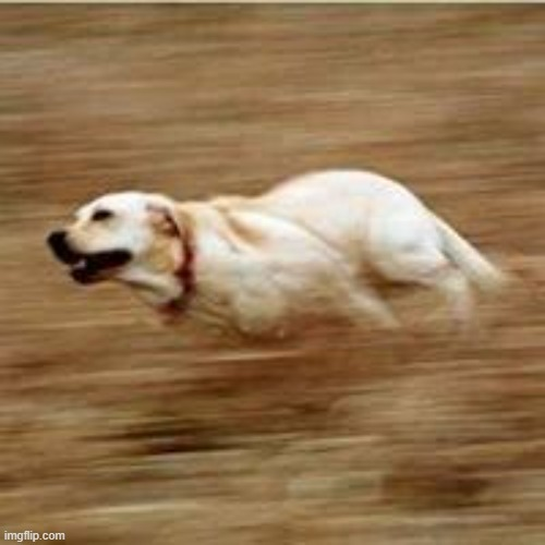 Speedy doggo | image tagged in speedy doggo | made w/ Imgflip meme maker