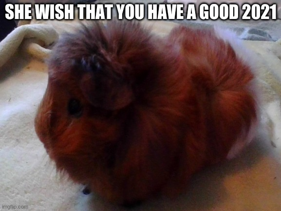 your welcome me friends |  SHE WISH THAT YOU HAVE A GOOD 2021 | image tagged in guinea pig | made w/ Imgflip meme maker