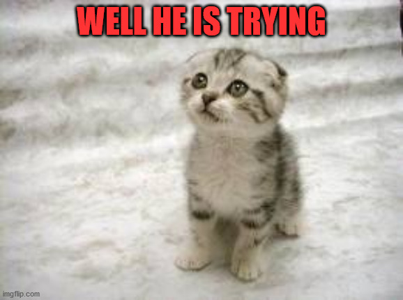 Sad Cat Meme | WELL HE IS TRYING | image tagged in memes,sad cat | made w/ Imgflip meme maker