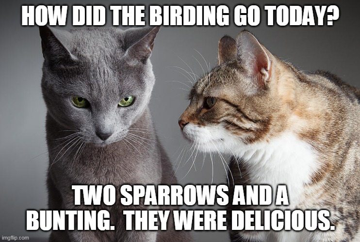 Birding |  HOW DID THE BIRDING GO TODAY? TWO SPARROWS AND A BUNTING.  THEY WERE DELICIOUS. | image tagged in cats,birds | made w/ Imgflip meme maker