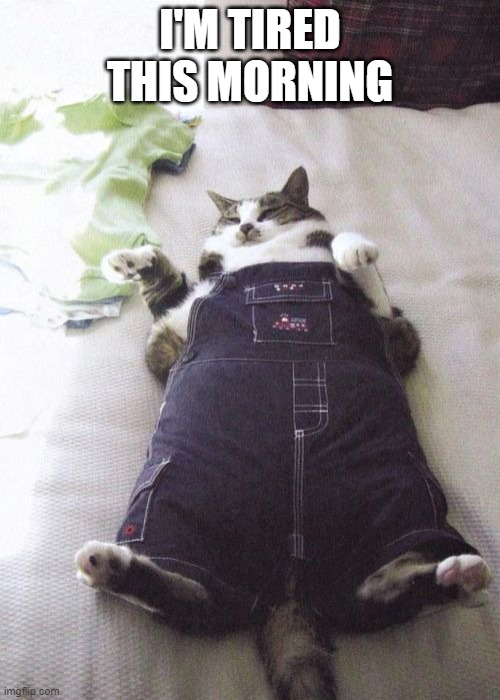 Fat Cat |  I'M TIRED THIS MORNING | image tagged in memes,fat cat | made w/ Imgflip meme maker
