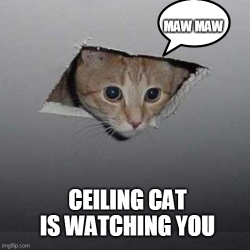 maw maw mewnew mawnuwu |  MAW MAW; CEILING CAT IS WATCHING YOU | image tagged in memes,ceiling cat | made w/ Imgflip meme maker