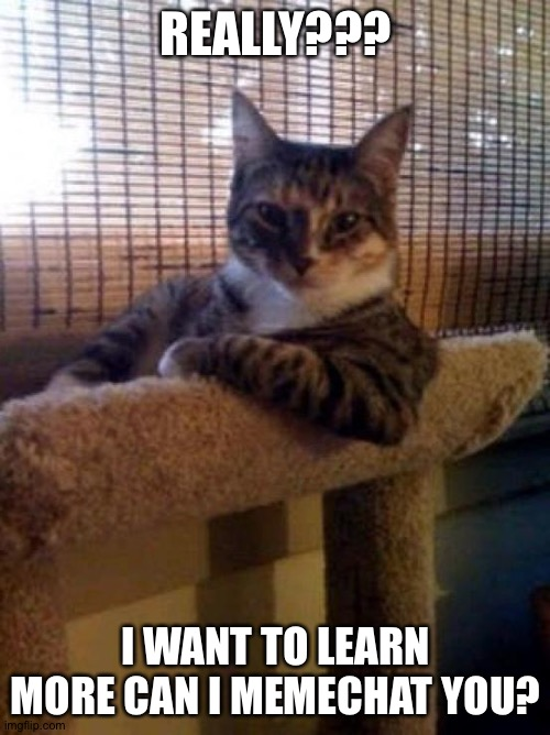 The Most Interesting Cat In The World Meme | REALLY??? I WANT TO LEARN MORE CAN I MEMECHAT YOU? | image tagged in memes,the most interesting cat in the world | made w/ Imgflip meme maker