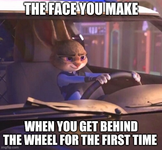 Judy Hopps: Rookie Driver |  THE FACE YOU MAKE; WHEN YOU GET BEHIND THE WHEEL FOR THE FIRST TIME | image tagged in judy hopps driving,zootopia,judy hopps,the face you make when,funny,memes | made w/ Imgflip meme maker