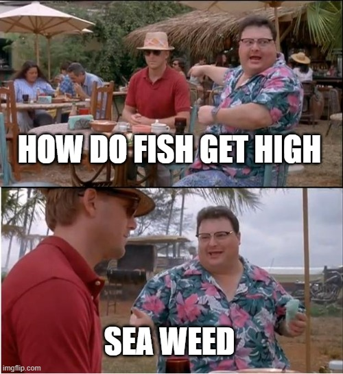 See Nobody Cares |  HOW DO FISH GET HIGH; SEA WEED | image tagged in memes,see nobody cares | made w/ Imgflip meme maker