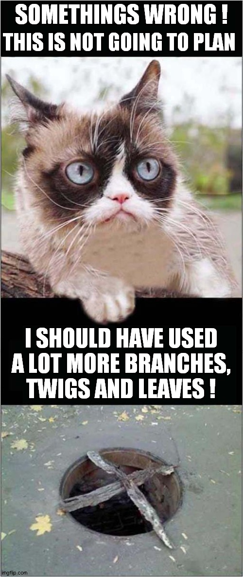 Grumpy Sets A Trap ! |  SOMETHINGS WRONG ! THIS IS NOT GOING TO PLAN; I SHOULD HAVE USED A LOT MORE BRANCHES, TWIGS AND LEAVES ! | image tagged in cats,grumpy cat,it's a trap | made w/ Imgflip meme maker