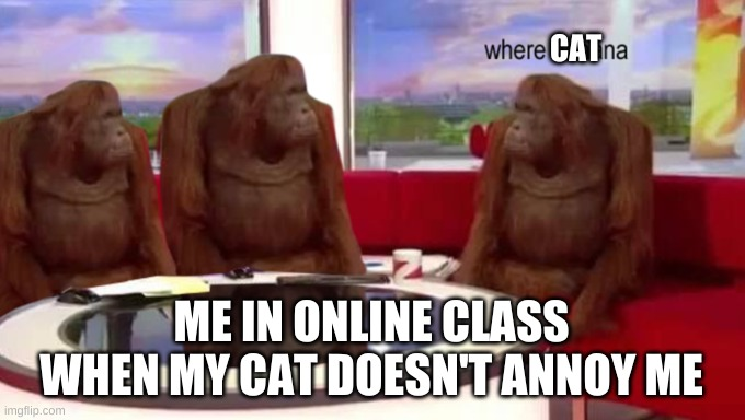 where cat |  CAT; ME IN ONLINE CLASS WHEN MY CAT DOESN'T ANNOY ME | image tagged in where banana,cat,funny,cats,kitty,meme | made w/ Imgflip meme maker