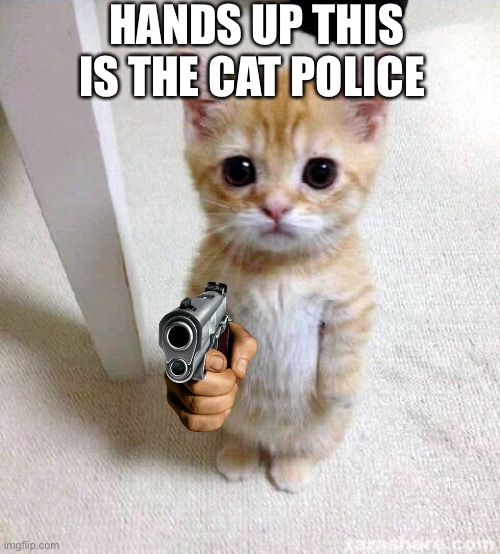 Cat police |  HANDS UP THIS IS THE CAT POLICE | image tagged in memes,cute cat,cats | made w/ Imgflip meme maker