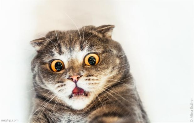 horrified cat | image tagged in horrified cat | made w/ Imgflip meme maker