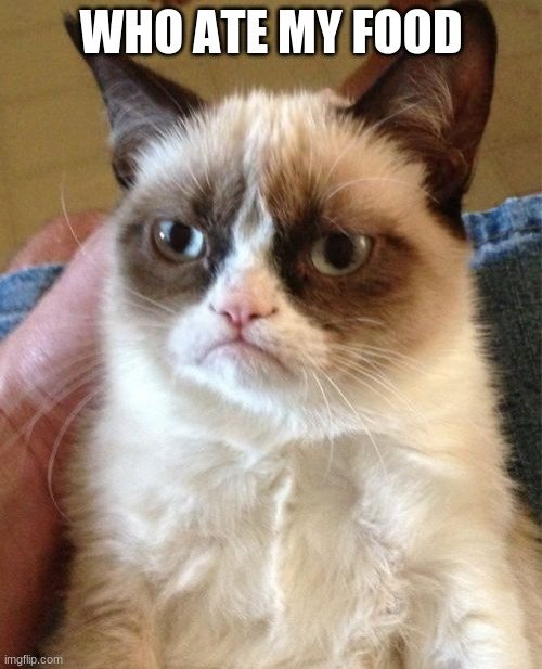 Grumpy Cat |  WHO ATE MY FOOD | image tagged in memes,grumpy cat | made w/ Imgflip meme maker
