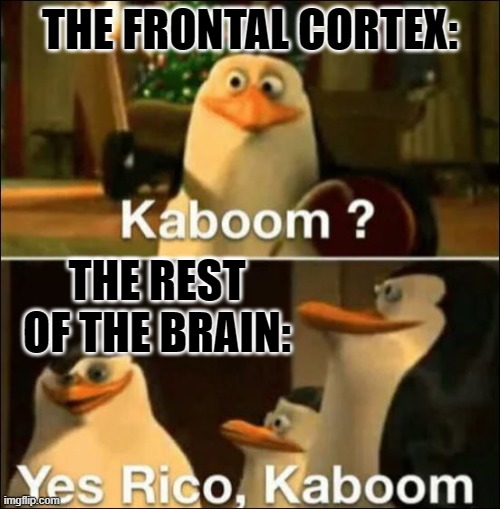 Kaboom? Yes rico kaboom |  THE FRONTAL CORTEX:; THE REST OF THE BRAIN: | image tagged in kaboom yes rico kaboom | made w/ Imgflip meme maker
