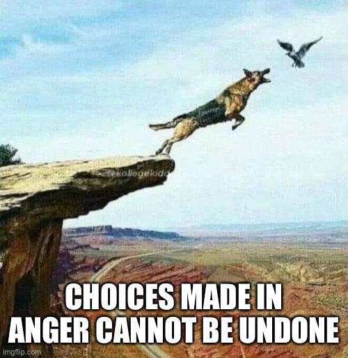 Angry Choices |  CHOICES MADE IN ANGER CANNOT BE UNDONE | image tagged in choices,anger management,dog,bird,cliff | made w/ Imgflip meme maker