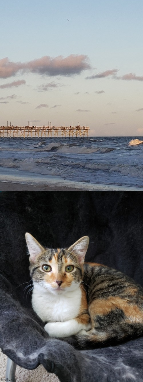 Cat and beach photo | image tagged in cat,beach | made w/ Imgflip meme maker