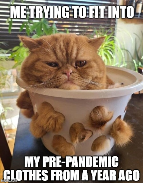 ME TRYING TO FIT INTO; MY PRE-PANDEMIC CLOTHES FROM A YEAR AGO | image tagged in cats,funny cats,pandemic,quarantine,weight gain,covid-19 | made w/ Imgflip meme maker