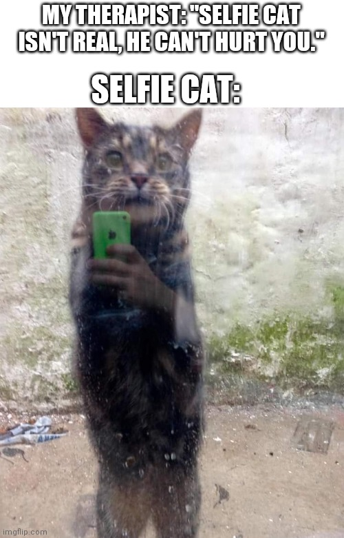 "Selfie cat |  MY THERAPIST: ""SELFIE CAT ISN'T REAL, HE CAN'T HURT YOU.""; SELFIE CAT: 