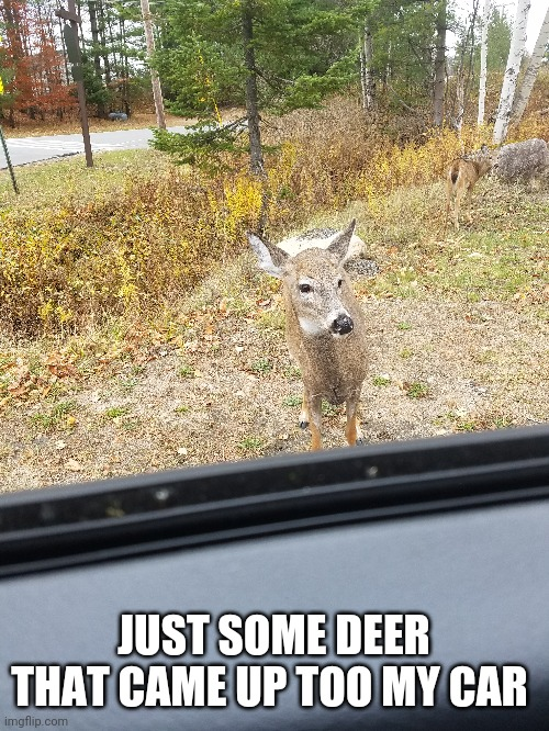 Also hai im new here ^w^ |  JUST SOME DEER THAT CAME UP TOO MY CAR | made w/ Imgflip meme maker