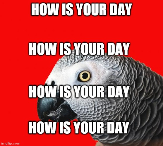 Repeating Parrot named Cishet | HOW IS YOUR DAY HOW IS YOUR DAY HOW IS YOUR DAY HOW IS YOUR DAY | image tagged in repeating parrot named cishet | made w/ Imgflip meme maker