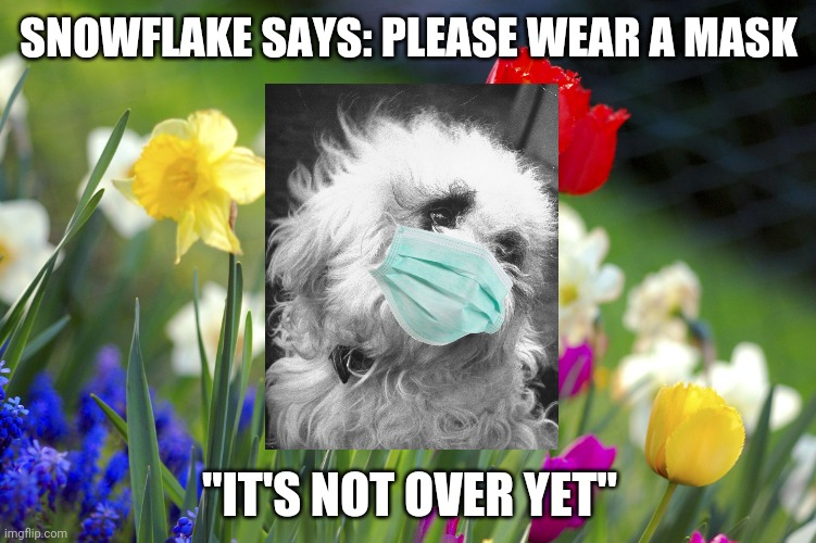 "Snowflake Says: |  SNOWFLAKE SAYS: PLEASE WEAR A MASK; ""IT'S NOT OVER YET"" 