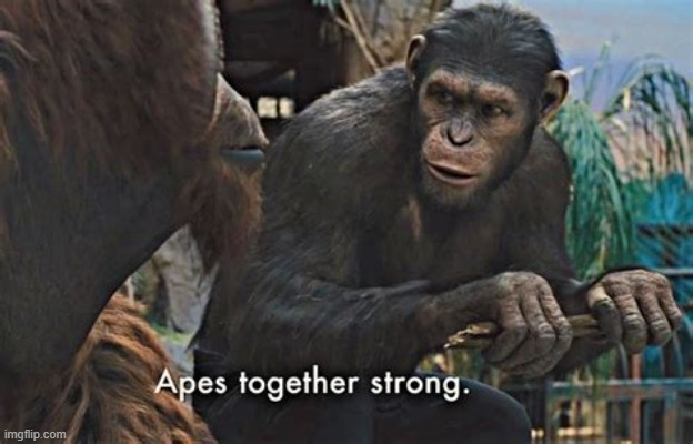 Apes strong together | image tagged in apes strong together | made w/ Imgflip meme maker