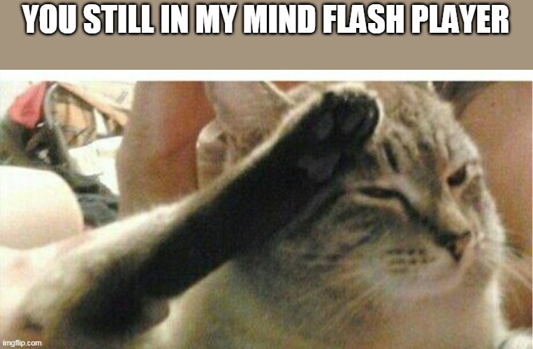 YOU STILL IN MY MIND FLASH PLAYER | image tagged in cat of honor | made w/ Imgflip meme maker
