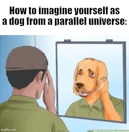 Giving Wikihow Captions Context |  How to imagine yourself as a dog from a parallel universe: | image tagged in blank white template,this is not meant to be offensive | made w/ Imgflip meme maker