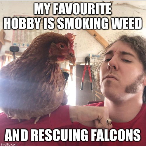 Rescuing falcons |  MY FAVOURITE HOBBY IS SMOKING WEED; AND RESCUING FALCONS | image tagged in chicken,falcons,smoking weed,smoking,weed,funny | made w/ Imgflip meme maker