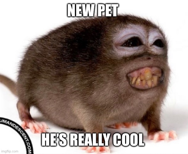 NEW PET; HE'S REALLY COOL | made w/ Imgflip meme maker