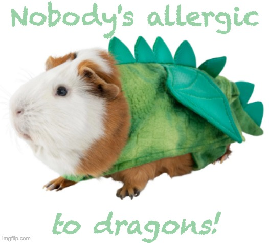 Hoping . . . |  Nobody's allergic; to dragons! | image tagged in guinea pig,costume,dragon,sneeze | made w/ Imgflip meme maker
