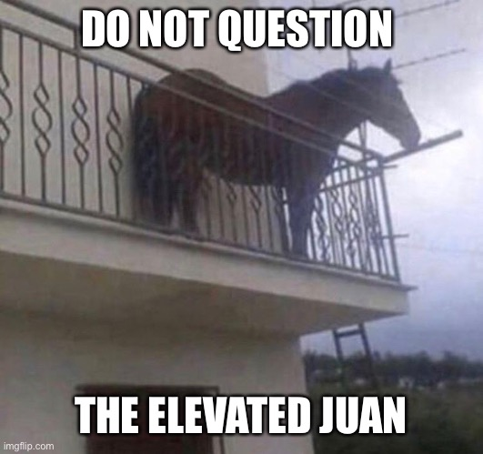 Juan is elevated |  DO NOT QUESTION; THE ELEVATED JUAN | image tagged in juan | made w/ Imgflip meme maker