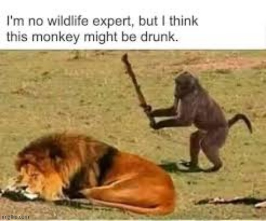 drunk monkey |  I'M NO WILDLIFE EXPERT BUT I THINK THIS MONKEY MIGHT BE DRUNK. | image tagged in monke,drunk,meme | made w/ Imgflip meme maker