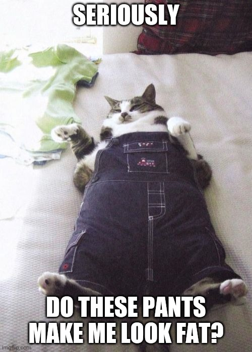 Fat Cat |  SERIOUSLY; DO THESE PANTS MAKE ME LOOK FAT? | image tagged in memes,fat cat | made w/ Imgflip meme maker