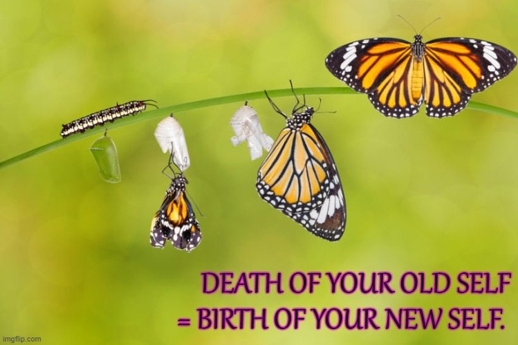Rebirth |  DEATH OF YOUR OLD SELF = BIRTH OF YOUR NEW SELF. | image tagged in change,butterfly,goals | made w/ Imgflip meme maker