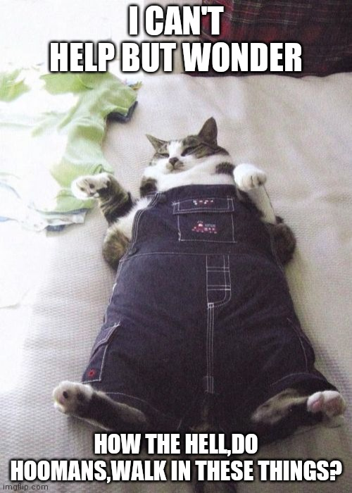 Fat Cat |  I CAN'T HELP BUT WONDER; HOW THE HELL,DO HOOMANS,WALK IN THESE THINGS? | image tagged in memes,fat cat | made w/ Imgflip meme maker