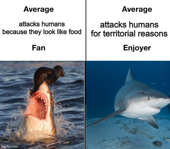 Virgin great white vs chad bull shark |  attacks humans because they look like food; attacks humans for territorial reasons | image tagged in virgin,chad,shark,biology,average,average blank fan vs average blank enjoyer | made w/ Imgflip meme maker